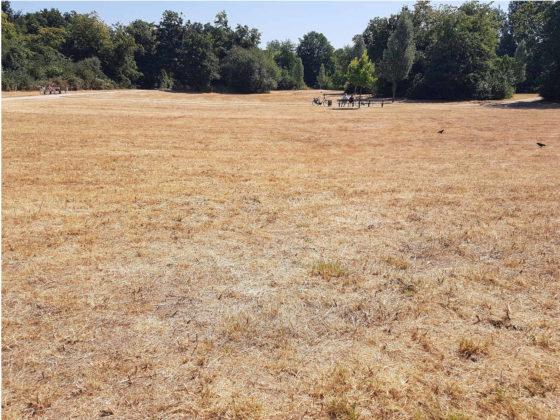Verdorrte Wiese während der Dürreperiode 2018 in Deutschland